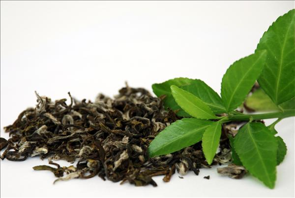Bí quyết làm đẹp với trà xanh một cách toàn diện 5