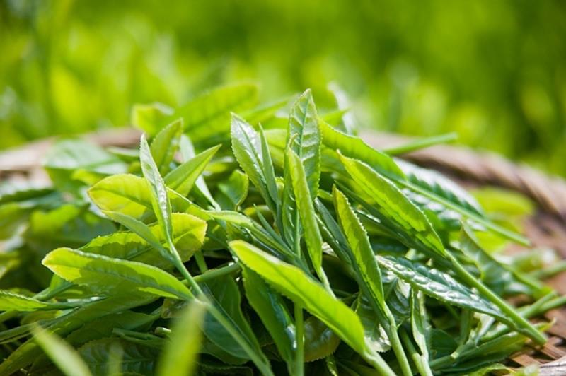 Những lợi ích tuyệt vời bạn nhận được từ việc uống trà xanh mỗi ngày 2