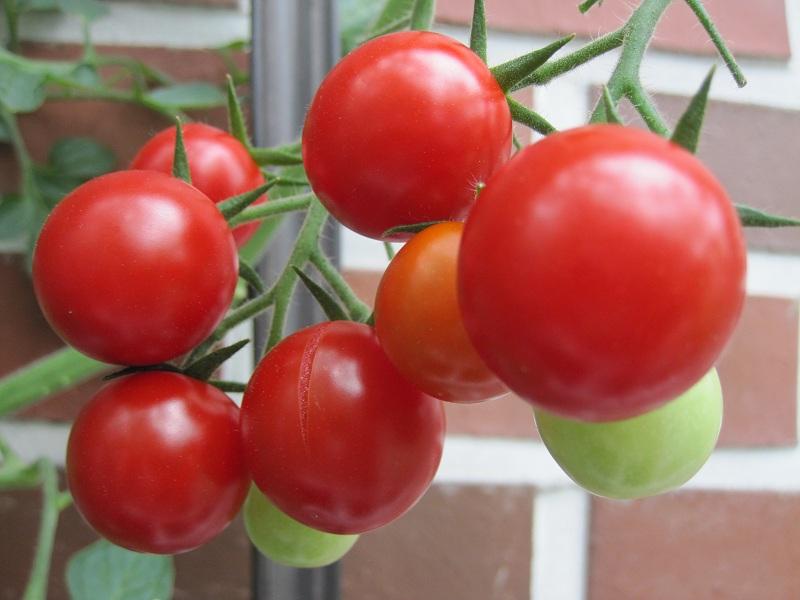 Bạn đã biets hết công dụng làm đẹp từ cà chua chưa 5