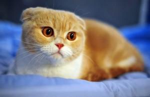 Ngạc nhiên vì công dụng hỗ trợ chữa bệnh ung thư từ phân mèo 1