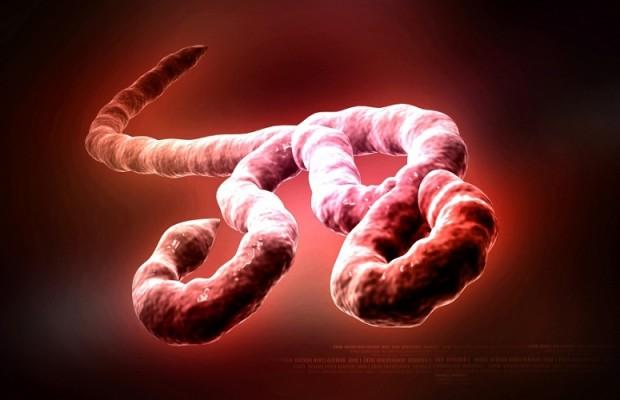 Nhữngđiều bạn nên biết để ngăn ngừa dịch Ebola 1