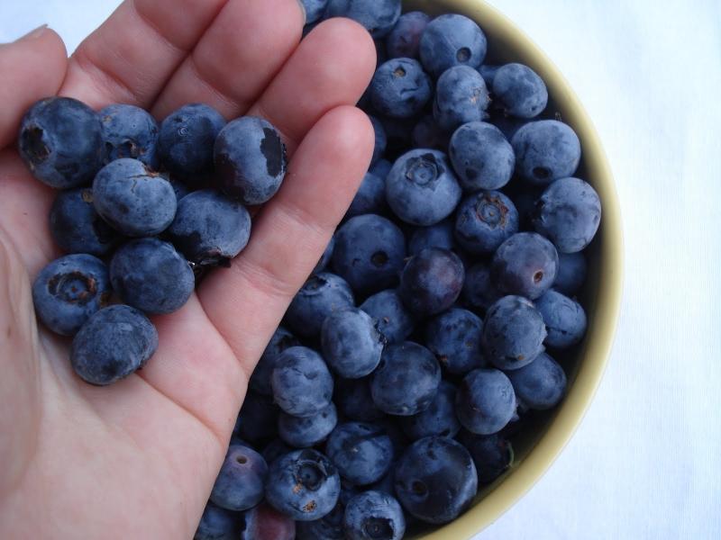 Những công dụng đáng ngạc nhiên của việt quất đối với sức khỏe bạn