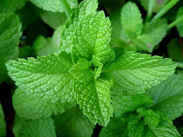 Xông hơi với thảo dược thiên nhiên để khỏe và đẹp mỗi ngày 2