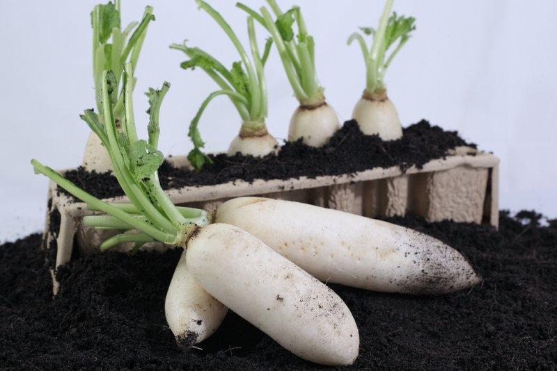 Cách làm trắng da nhanh chóng nhờ củ cải trắng 2