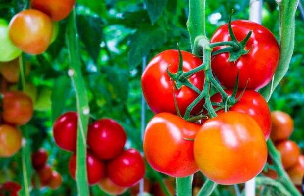 Thực đơn giúp giảm cân nhanh trong 3 ngày nhờ cà chua 0