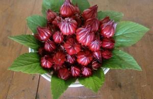 Trà hibiscus giúp giảm mỡ bụng nhanh chóng 0