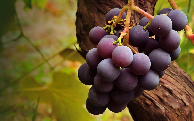 Mẹo hay giúp bạn khử sạch hóa chất có trong trái cây 4