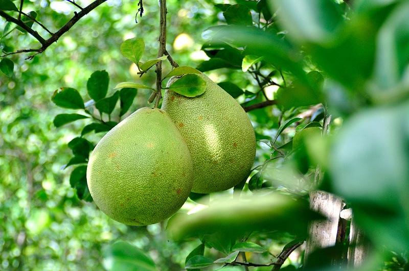 Những điều nên tránh khi dùng trái cây tươi để giảm cân 3