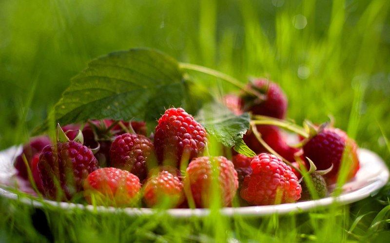 Giảm cân nhanh chóng bằng những loại quả mọng nước 3
