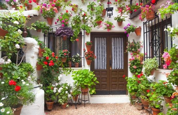 Giúp không gian nhà bạn ngập tràn sắc xuân với những chậu hoa củ 0