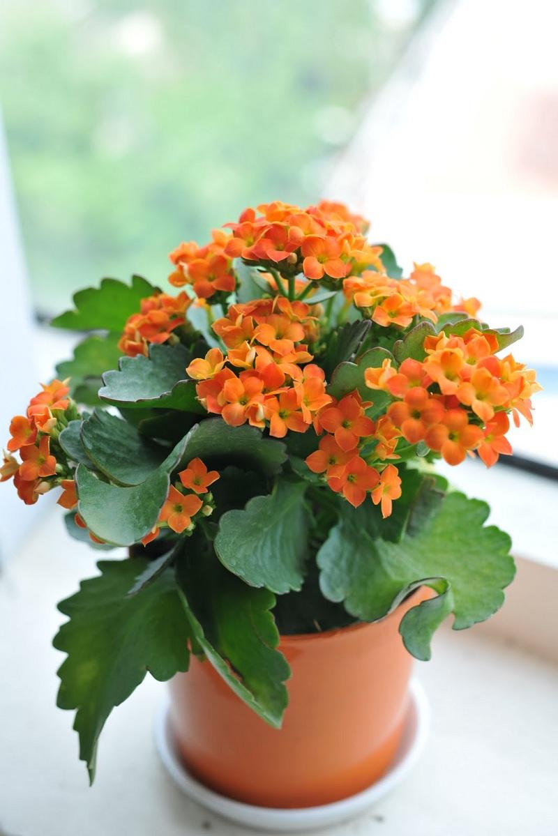 Giúp không gian nhà bạn ngập tràn sắc xuân với những chậu hoa củ 1