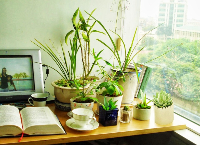 Giúp không gian nhà bạn ngập tràn sắc xuân với những chậu hoa củ 2
