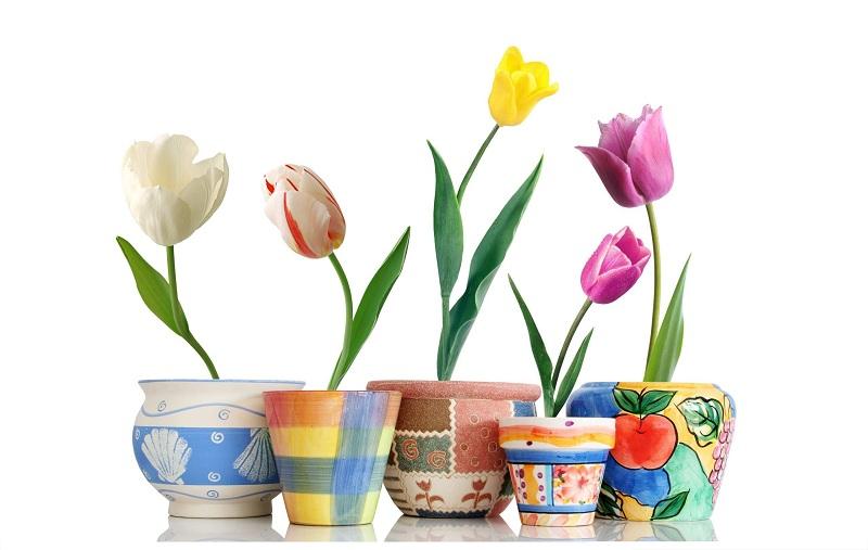 Giúp không gian nhà bạn ngập tràn sắc xuân với những chậu hoa củ 4