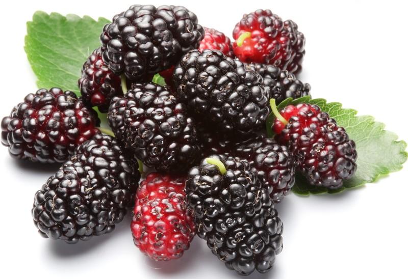 Những loại quả màu đen cực tốt cho sức khỏe giúp đẹp da, giữ dáng3