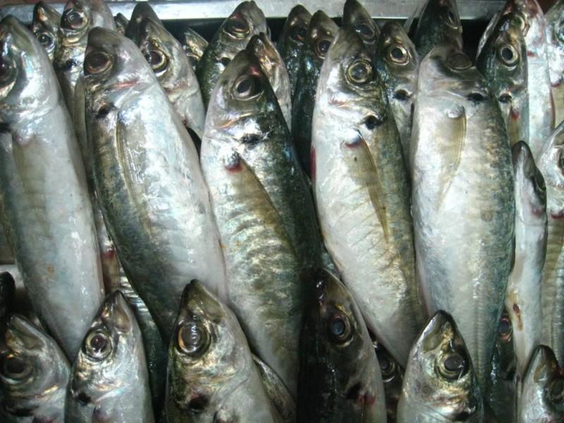 Cá là nguồn cung cấp protein rất tốt cho cơ thể và hỗ trợ hiệu quả cho tiến trình giảm cân