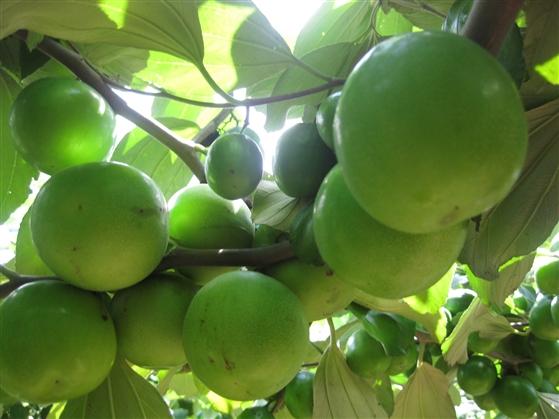 Top 3 loại rau quả giàu chất xơ giúp ích cho quá trình giảm cân4