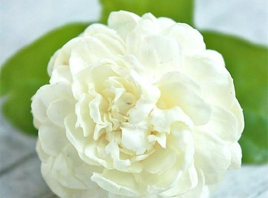 Làm đẹp nhanh với hoa nhài bạn đã thử chưa?