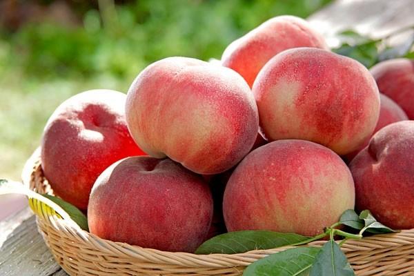 Tư vấn 5 loại trái cây giúp ích cho bạn trong quá trình đốt cháy mỡ thừa